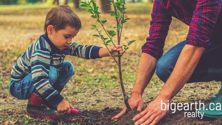 1 home 1 tree